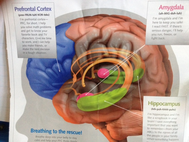 The Brain The Mindful Classroom